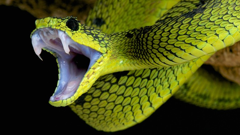К чему приснилась зеленая змея