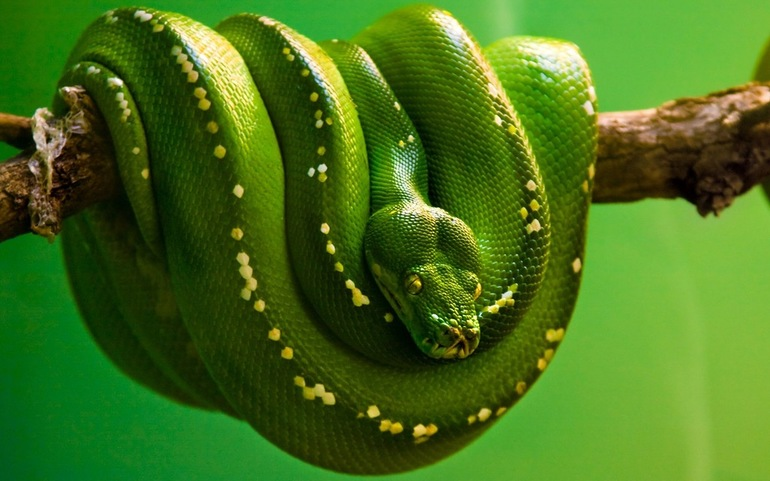 Действие змеи во сне