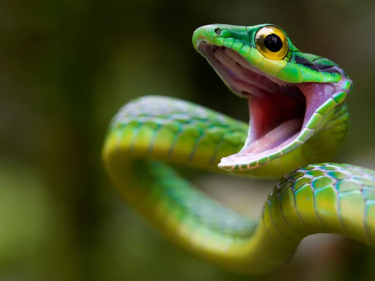 Видеть во сне зеленую змею и убить ее thumbnail