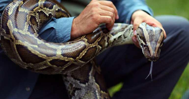 Значение сна про змей