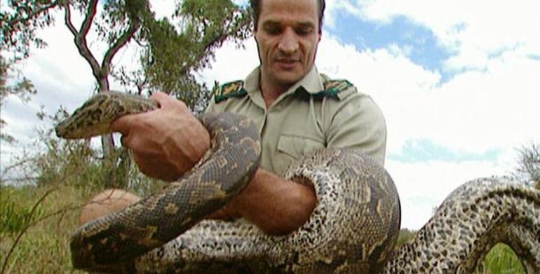 Толкование сна про змею