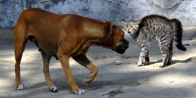 к чему снится драка кошки с собакой