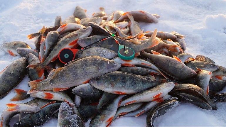 Успешная ловля рыбы зимой