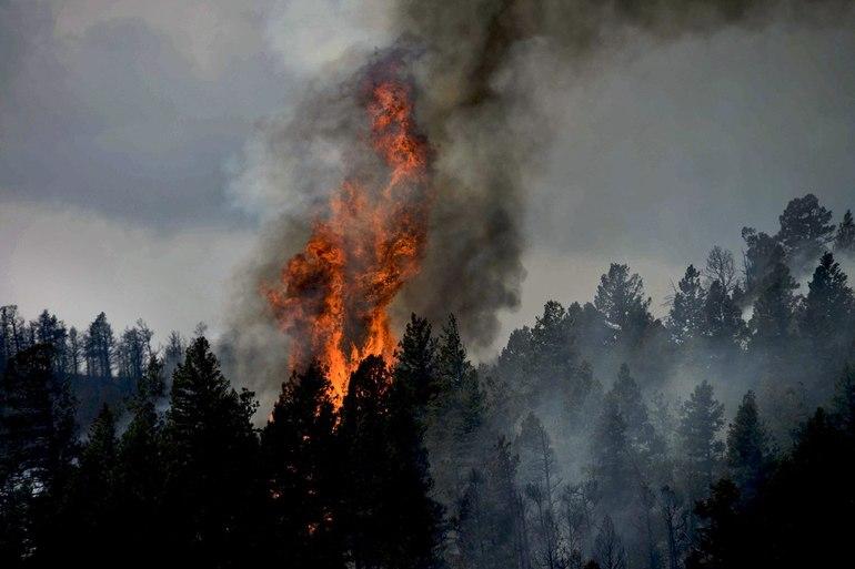 Сон, где снится пожар в лесу