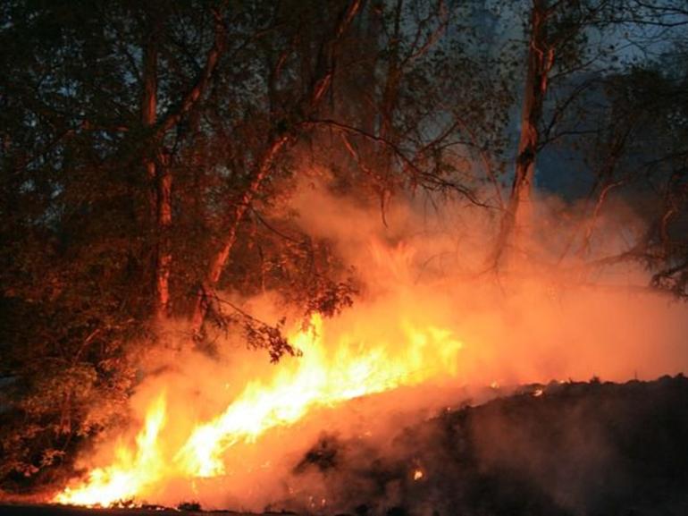 Если довелось видеть деревья, охваченные пламенем