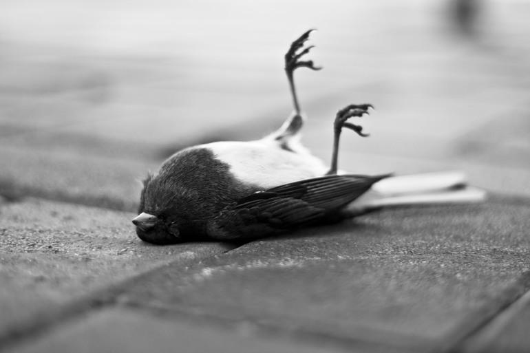 Видеть во сне мертвую птичку thumbnail