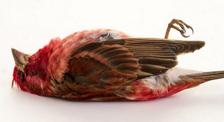К чему сон про метрвых птиц