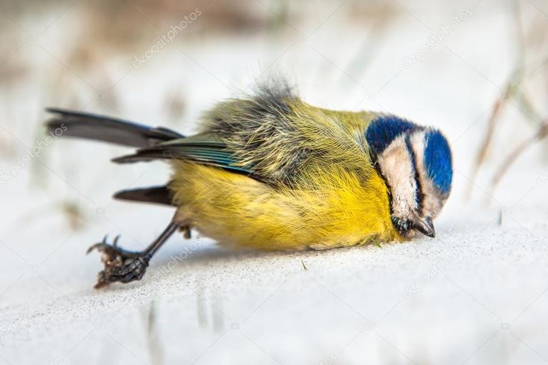Умершая птичка