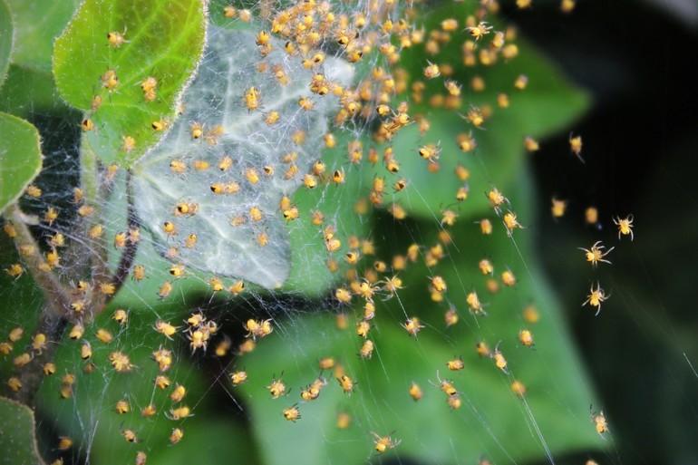 Приснились маленькие пауки