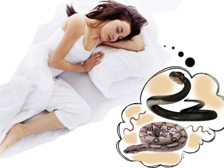 К чему приснилась змея беременной