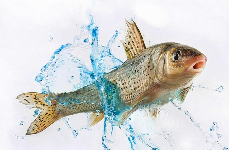 Сновидения о рыбе
