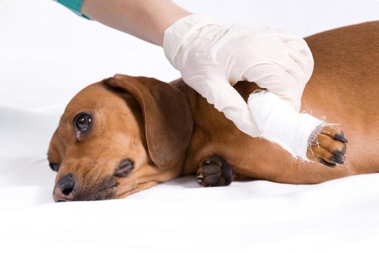 Увидеть радостно прыгающих на тебя собак — это означает признательность со стороны противников или же что тебе простятся твои прегрешения.