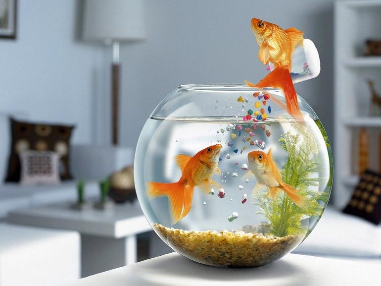 аквариум с рыбками к чему снится