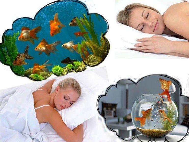 Рыбки в аквариуме сонник