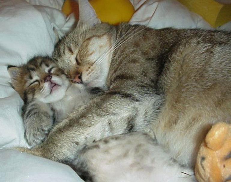 К чему видеть котенка во сне