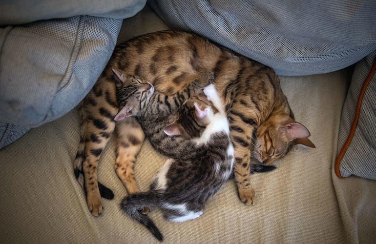 Особенности толкования сна про котят