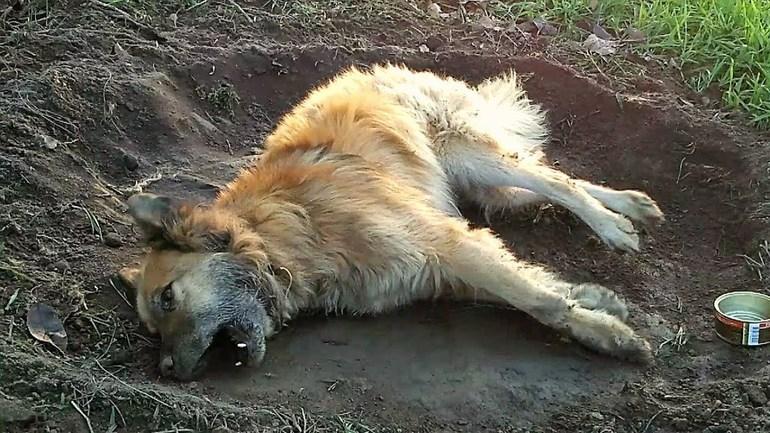 Собака умерла от старости
