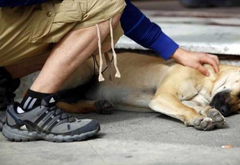 Хозяину снится смерть своей собаки