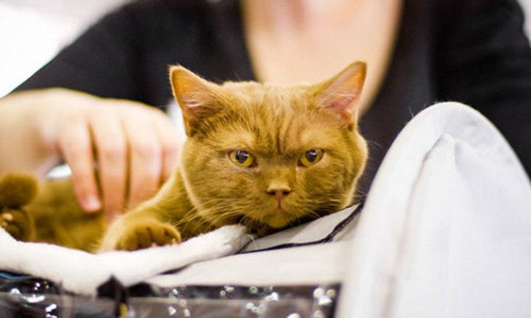 Сонник, кошки