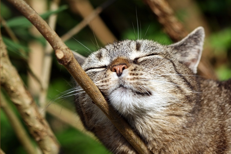К чему снится кошка