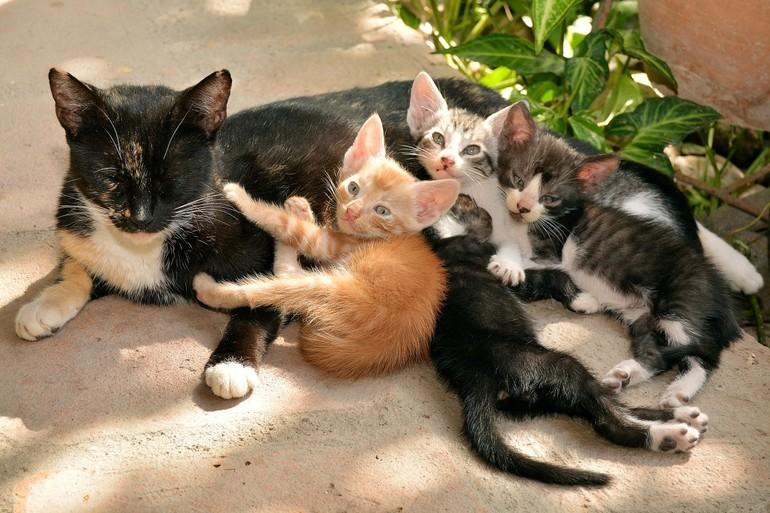 Сонник кошка с котятами к чему снится