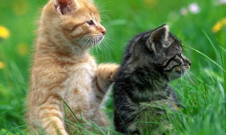 Кошка с котятами к чему приснились