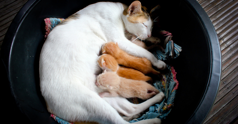 Особенности значения сна про кошек