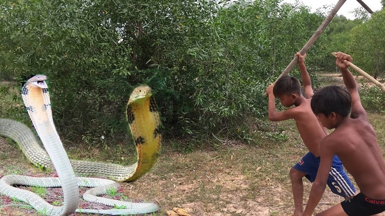 Что означает змеиный укус