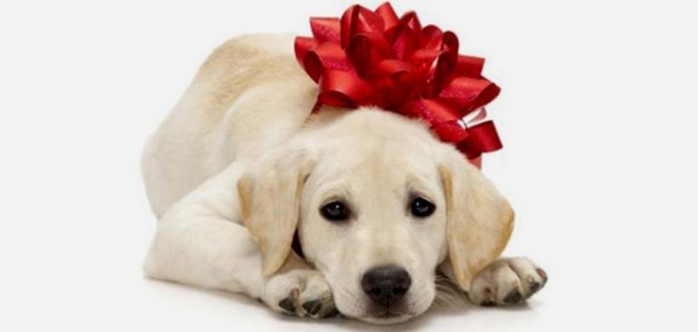 сонник подарили щенка