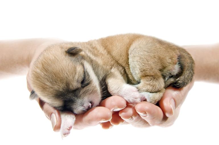 Как растолковать сон про подарок щенка