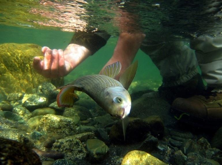 Ловля рыбы руками в чужом аквариуме, сулит неприятности его владельцу.