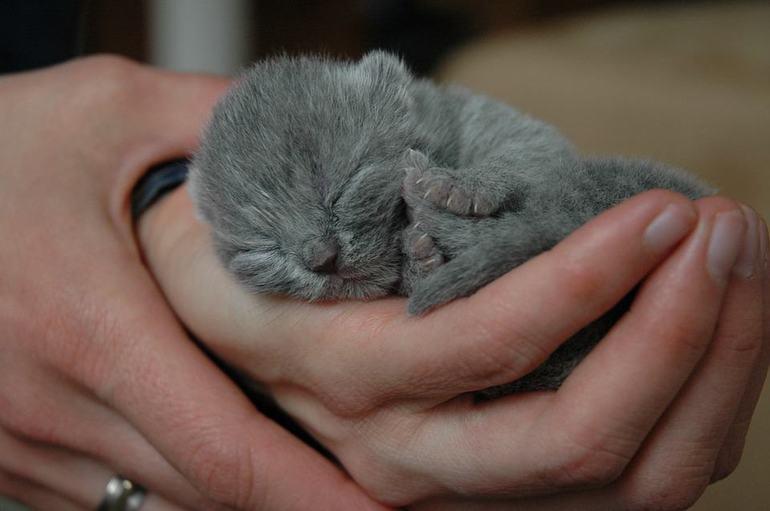 К чему снятся новорожденные котята