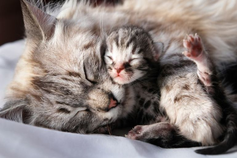 Новорожденные котята во сне