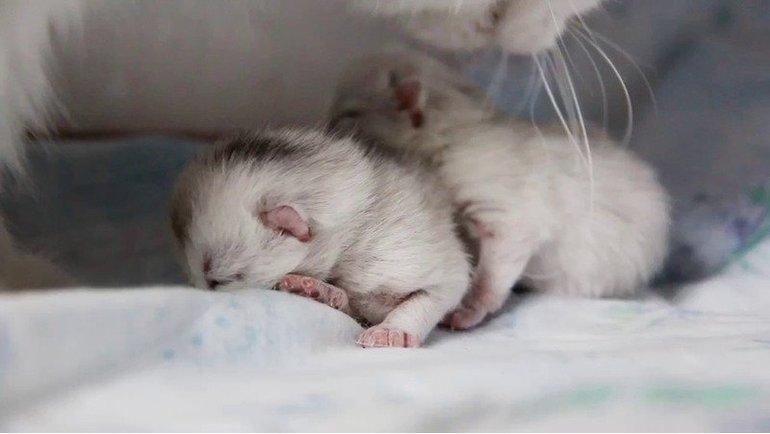 Значение действий спящей и поведения животных во сне