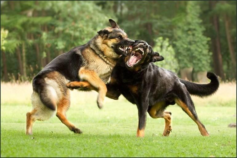 Толкование по соннику спасти собаку