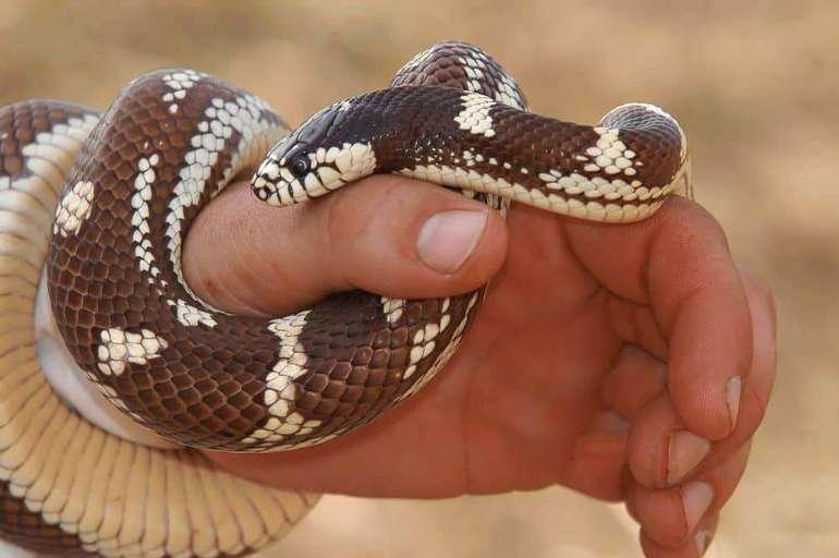 Держать змею в руках во сне