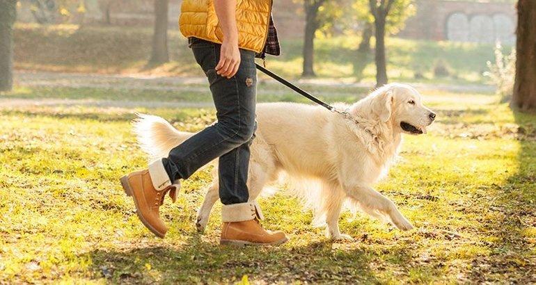 К чему снится гулять с собакой