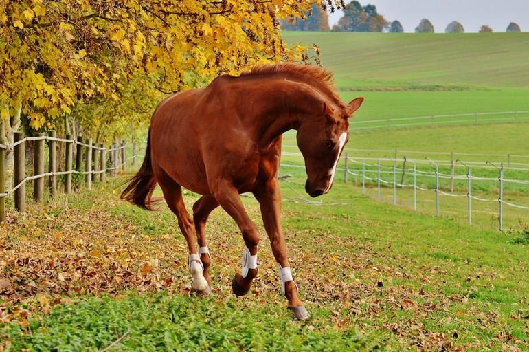 Лошадь в сновидении – может символизировать самые различные стороны жизни, поэтому особенно важны все второстепенные сновидения, которые раскрывают смысл ее явления.