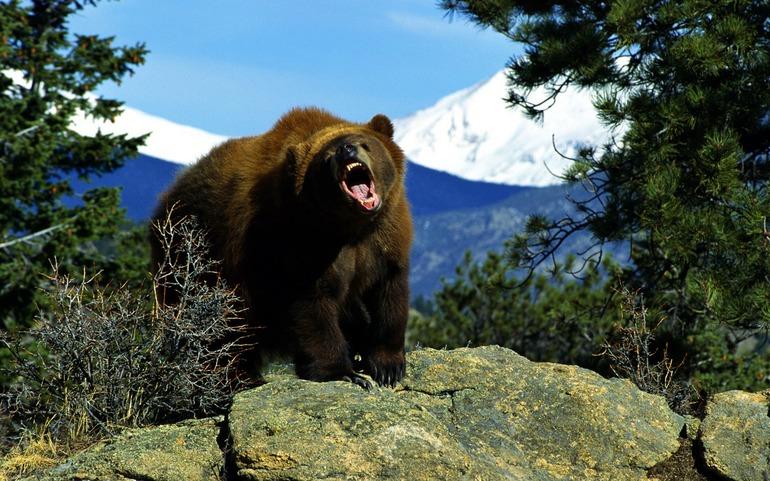 Рёв медведя в сновидении
