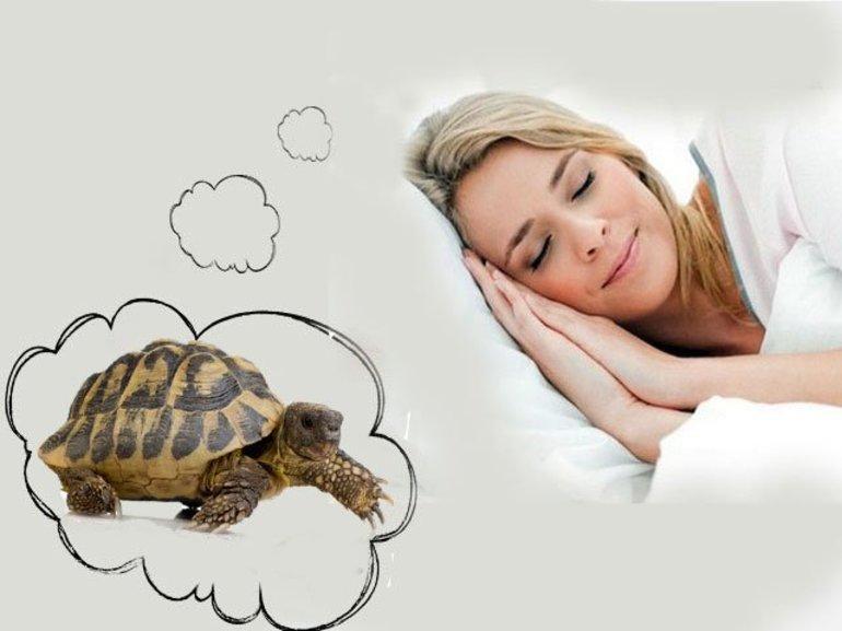 Черепаха в сновидении