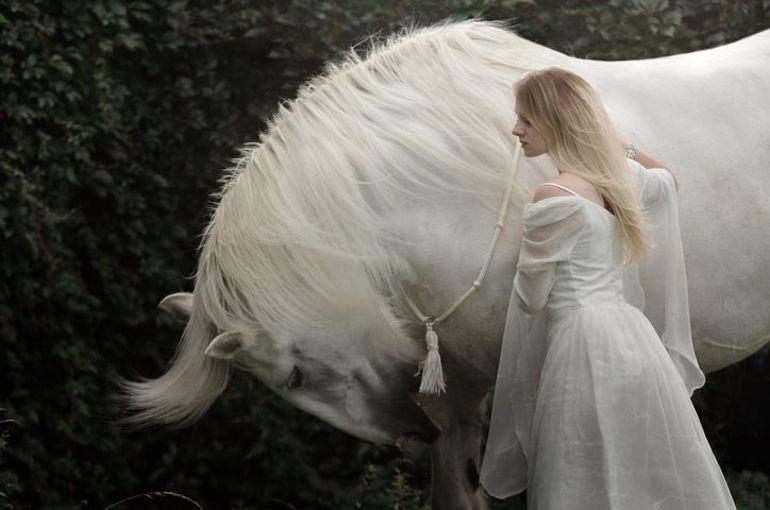 Сновидение о белой лошади