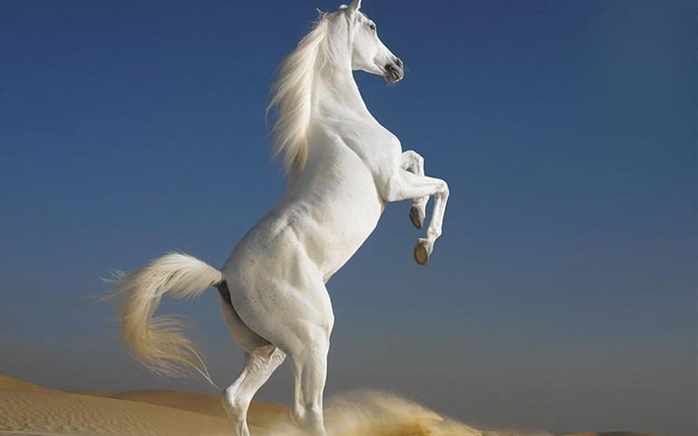 Толкование снов о белых лошадях