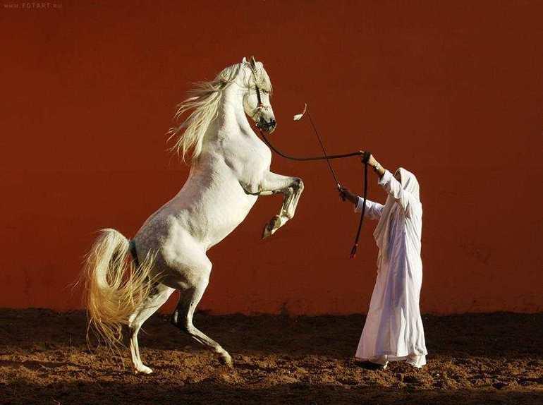 Укрощение белой лошади в сновидении