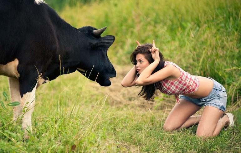 Сонник девушка с коровами