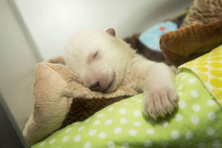 Видеть медвежонка во сне