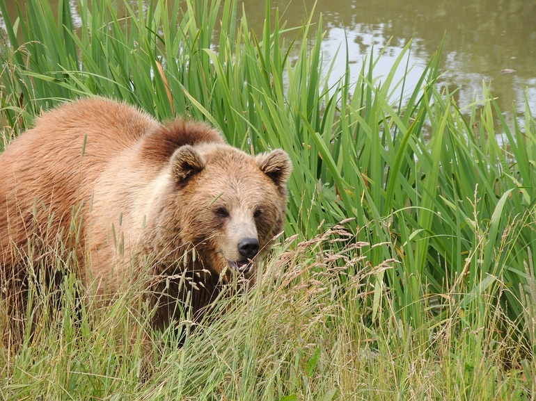 Толкование сна про медвежонка