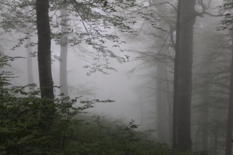 Сонник туман