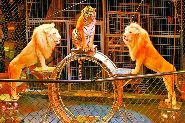 Видеть во сне животных в цирке