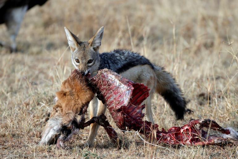 Видеть голодного зверя