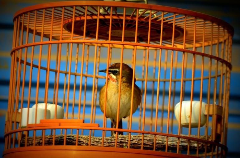 Птицы в клетке во сне